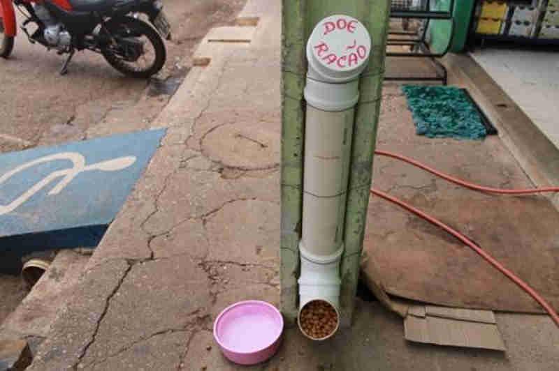 Morador de Picos (PI) desenvolve comedouros para animais que vivem em situação de abandono