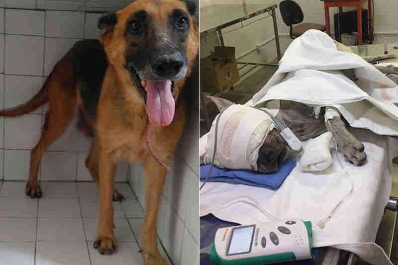 Cantora no Piauí fará show para ajudar animais resgatados