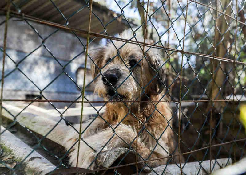 Animais maltratados: O grupo que faz justiça pelas próprias mãos em Portugal