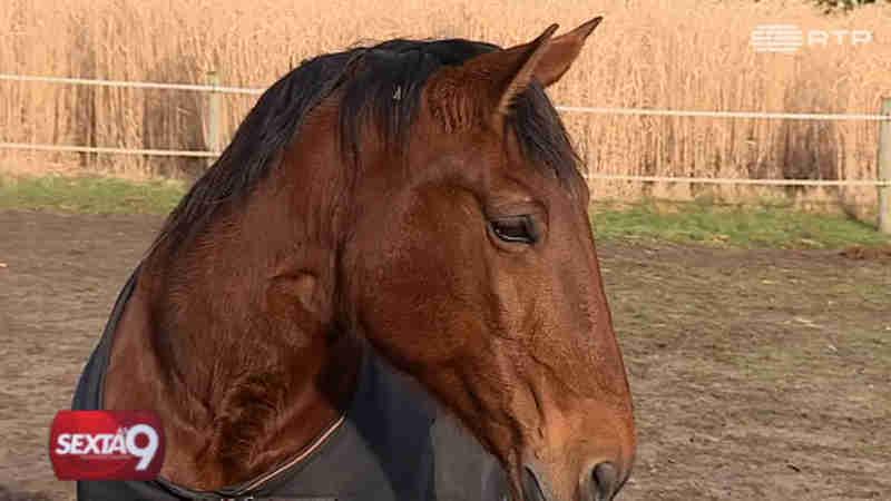 Presidente da Their Voice Portugal alvo de denúncias de maus tratos a cavalos