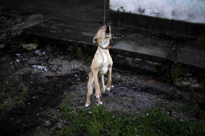 Acusado de maus tratos a 24 cães diz que gosta de animais