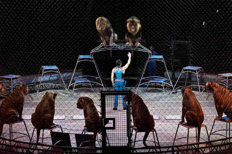 Fim dos animais nos circos em Portugal? Parlamento cria grupo de trabalho para alargar discussão