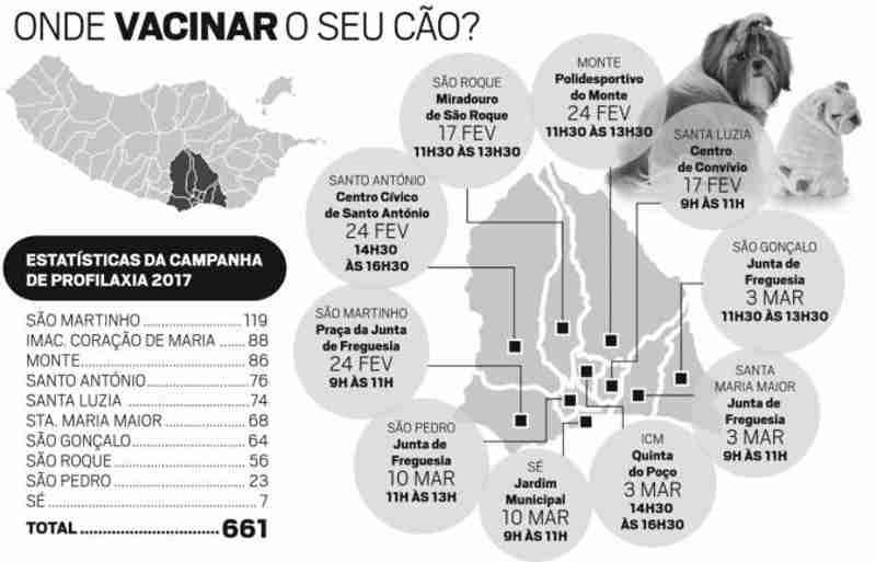 Acordo para esterilizar 1.710 animais errantes em Funchal, Portugal