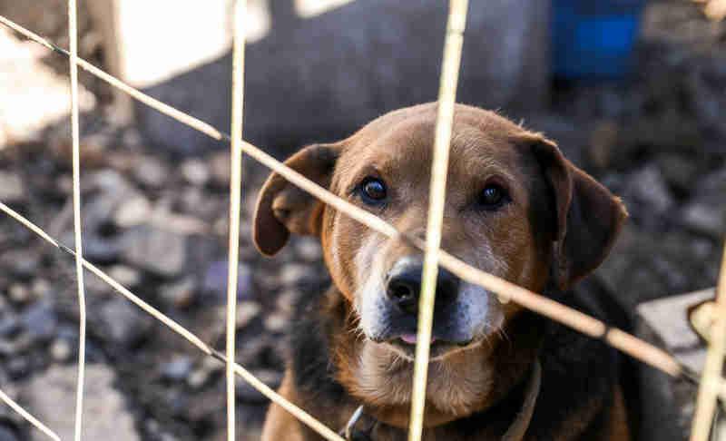 Toda a verdade sobre a violência escondida contra animais em Portugal
