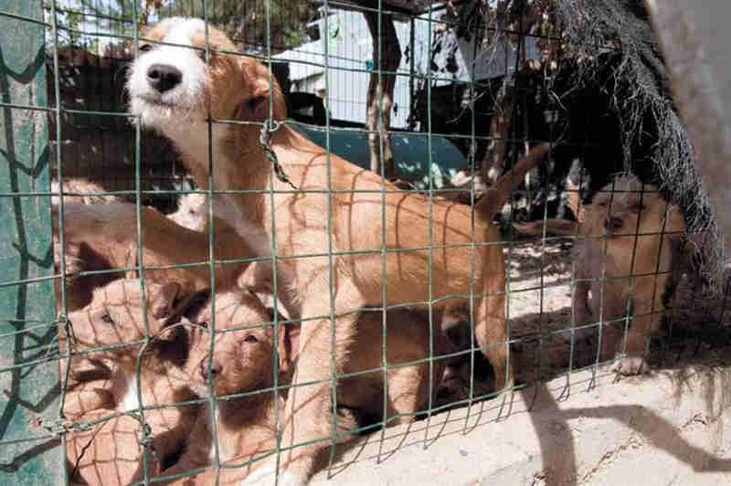 Condenado a pagar 3.500 euros por matar cão do vizinho