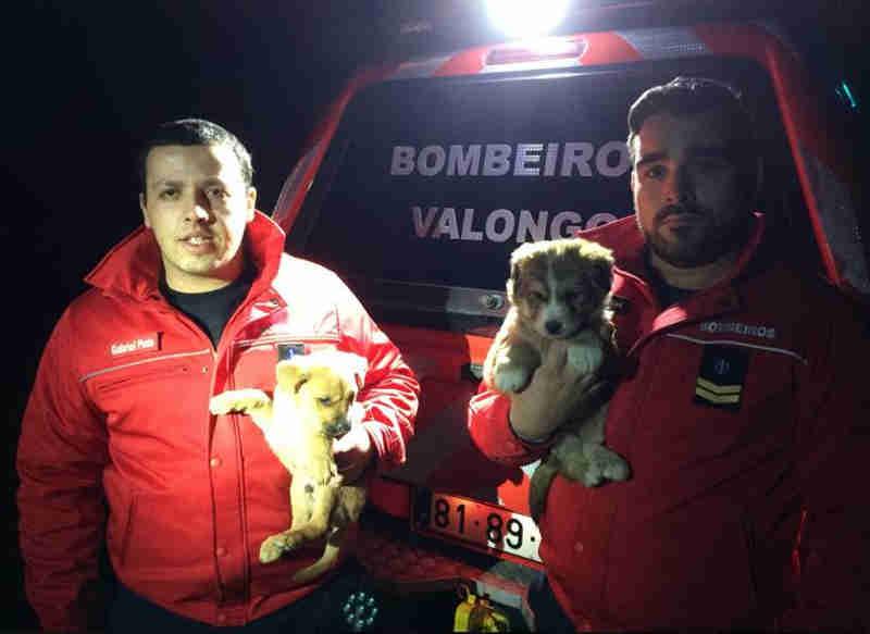 Portugal: Bombeiros de Valongo resgatam dois cães de uma caixa de água