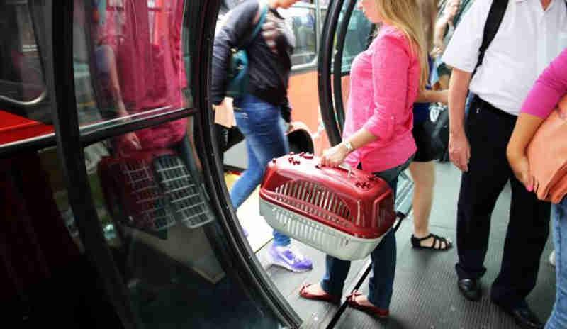 Projeto pode autorizar transporte de animais em ônibus de Curitiba, PR