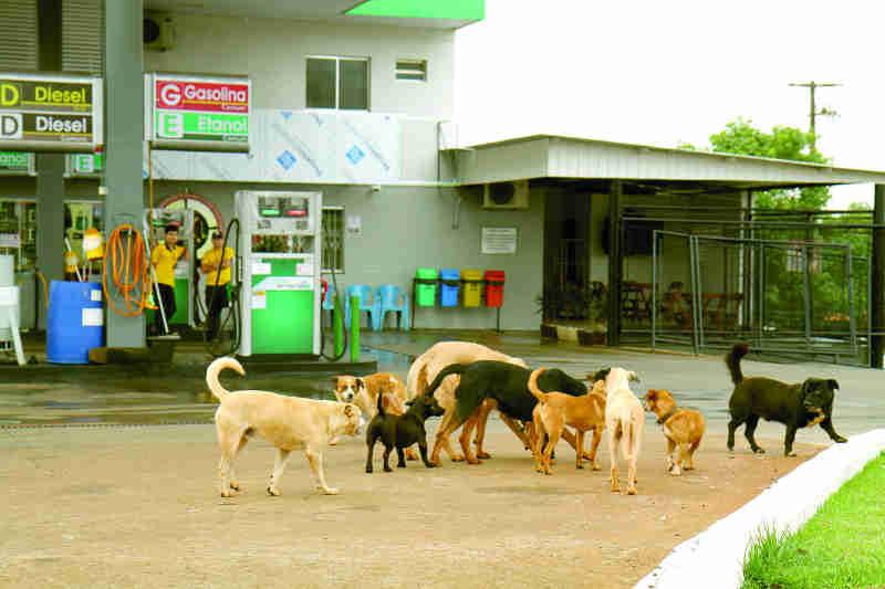 330 animais castrados em Cascavel, PR