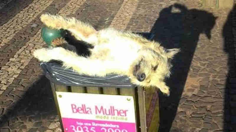 Cachorro morto jogado em lixeira causa revolta em Cascavel, PR