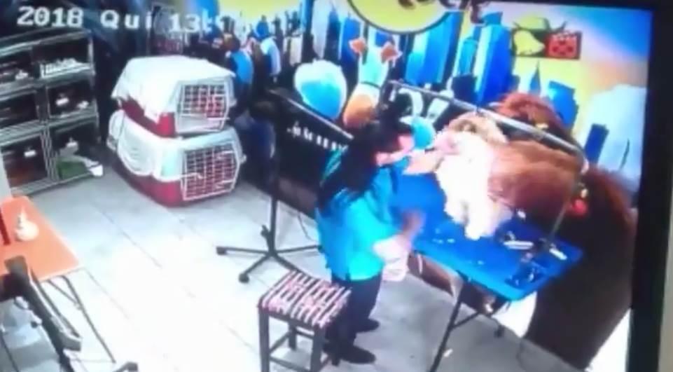 Proprietário acusado de maus-tratos em pet shop não foi à delegacia em Curitiba, PR