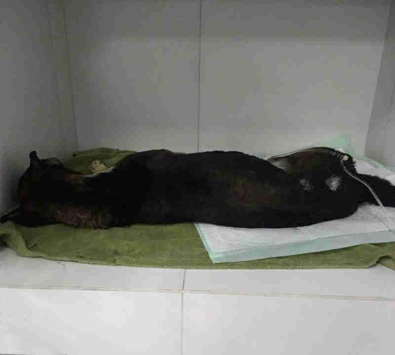 Morre cachorro queimado por morador do bairro Pilarzinho, em Curitiba, PR