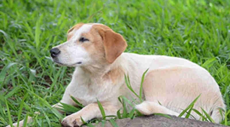 Termo de Compromisso viabiliza castração de animais em Londrina, PR