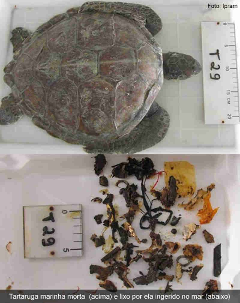 Plástico que mata animais marinhos é encontrado na águas das torneiras