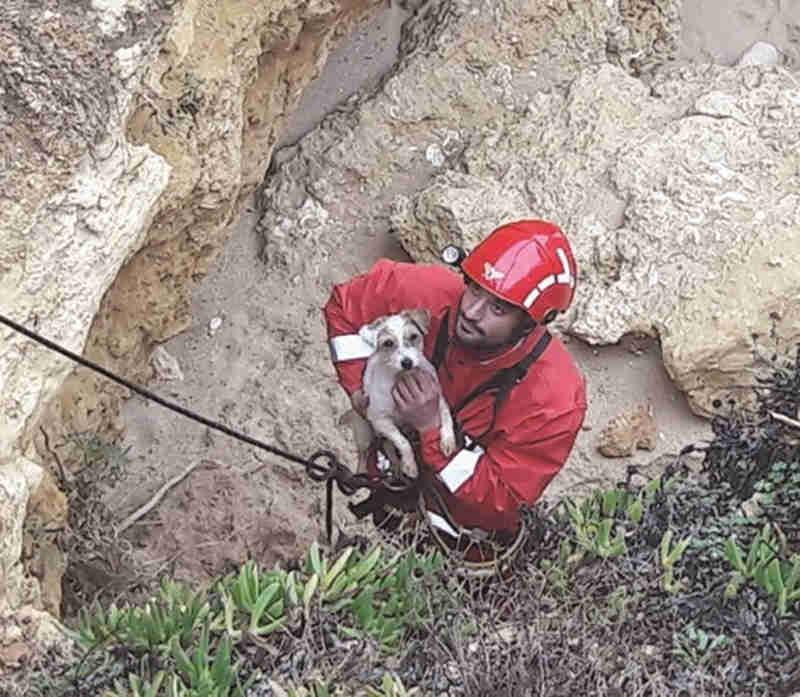 Bombeiro a resgatar animal