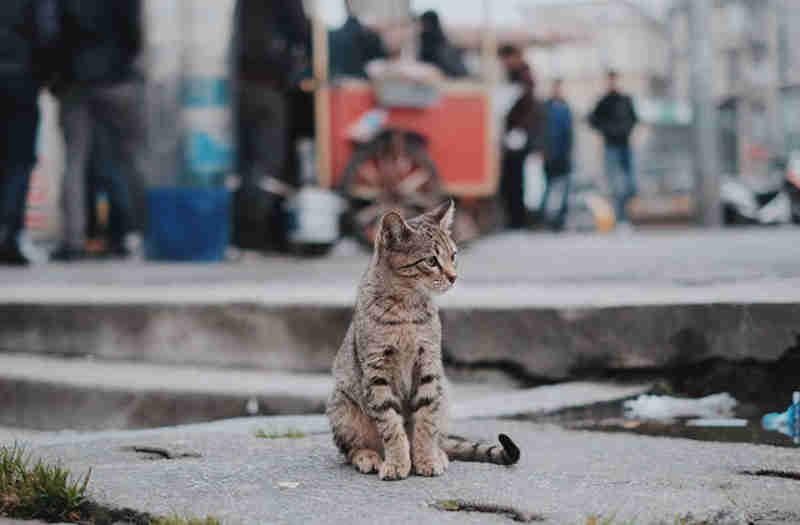 Portugal: Bloco de Esquerda quer Estatuto do Animal Comunitário
