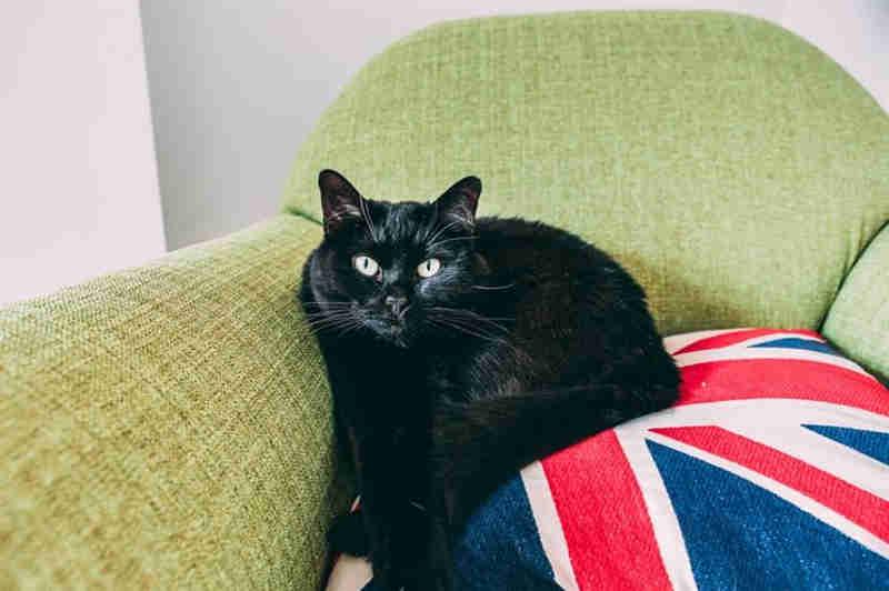 Gatos pretos estão a ser recusados no Reino Unido porque não ficam bem no Instagram