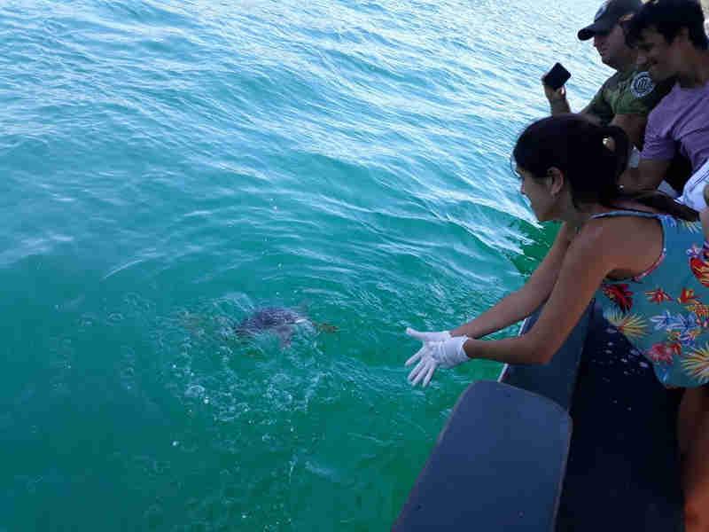 Tartaruga foi solta em Arraial do Cabo (Foto: Guarda Ambiental de Arraial do Cabo/Divulgação)