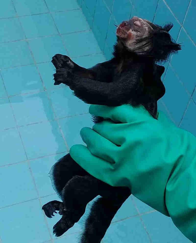 Macacos são encontrados mortos em Nova Friburgo, no RJ