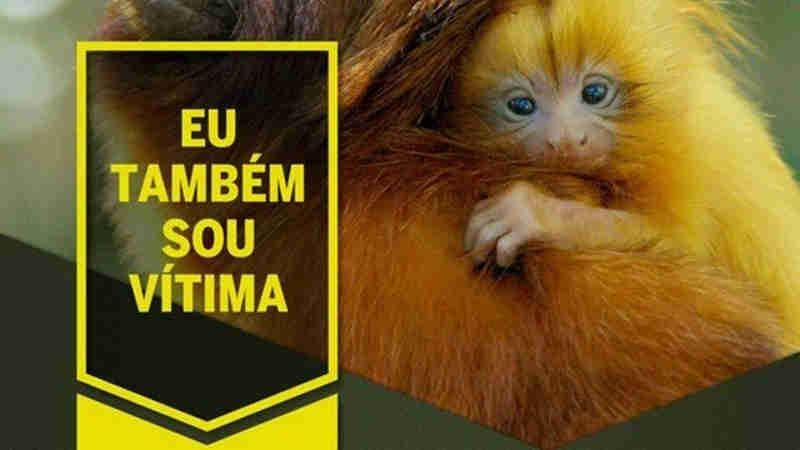 Prefeitura do Rio lança campanha contra massacre de macacos por causa da febre amarela