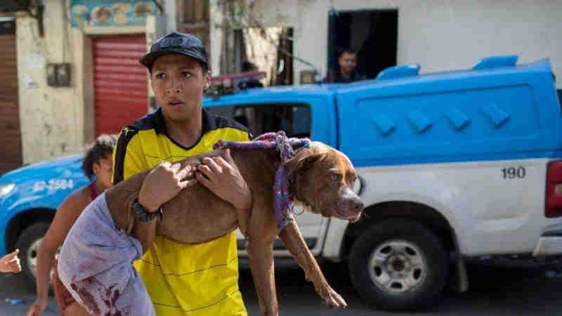 Grupo cria 'vaquinha virtual' para tratamento de cachorro baleado na Rocinha, na Zona Sul do Rio