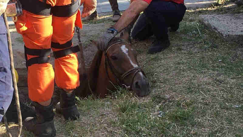 Câmera de segurança flagra momento em que égua cai em bueiro em Porto Alegre; veja vídeo