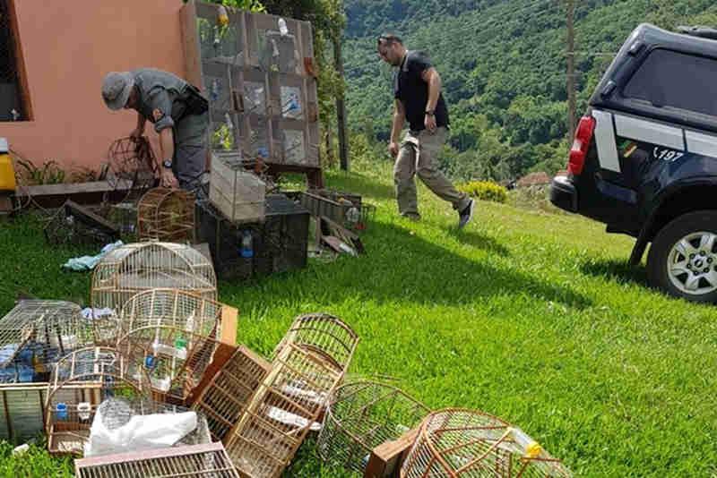 Polícia Civil e Brigada Militar apreendem pássaros silvestres no Vale do Taquari, no RS