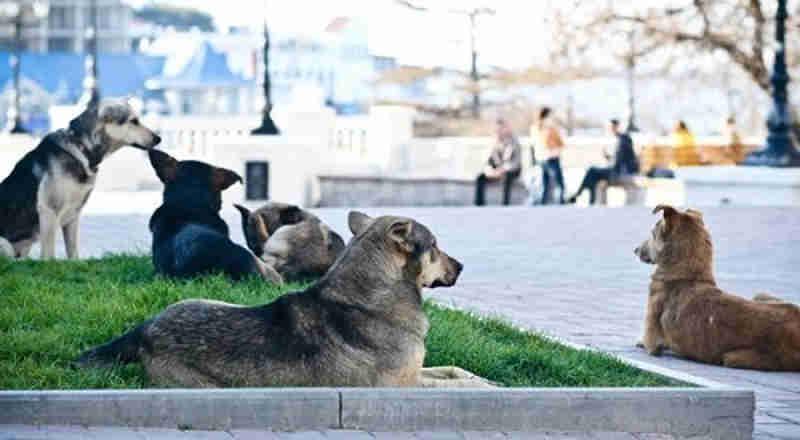 Campanha por Copa sem vira-latas causa polêmica e mortes de cães na Rússia