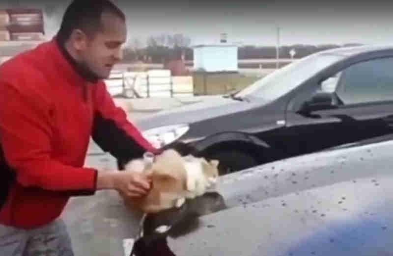 Usa gato como esponja para lavar Mercedes, na Rússia