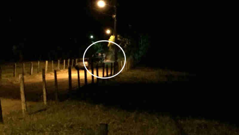 Autoridades se preparam para o enfrentamento da farra de boi em Santa Catarina