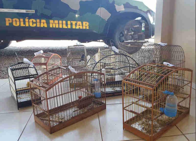 Aves mantidas em cativeiro são apreendidas pela Polícia Ambiental em Modelo, SC
