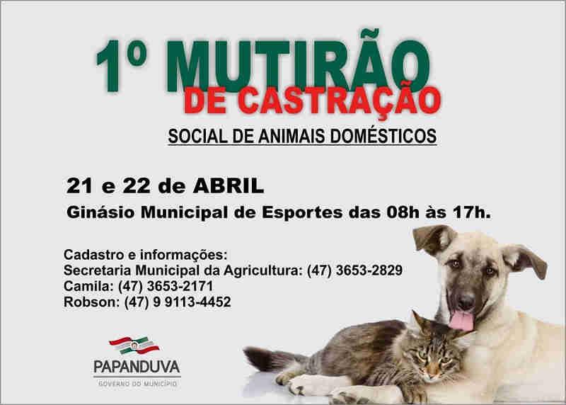 1ª Mutirão de Castração de Animais Domésticos visa promover o controle populacional de animais de rua em Papanduva, SC