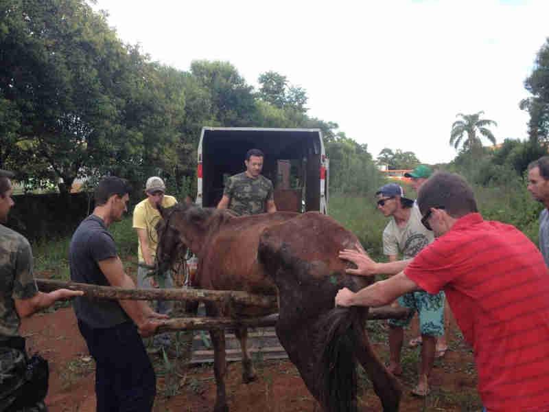 Cavalo vítima de maus-tratos morre em Três Barras, SC