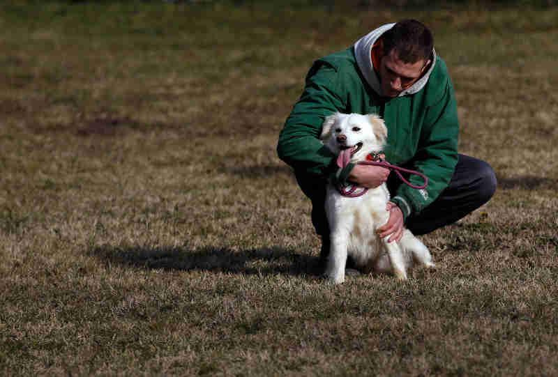 Presos cuidam de cachorros abandonados em cadeia na Sérvia
