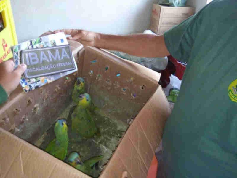 Vendedor filhotes de papagaios no Facebook é autuado em Propriá, SE