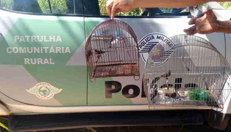 Polícia Ambiental resgata pássaros silvestres e aplica multa para criador em Adamantina, SP
