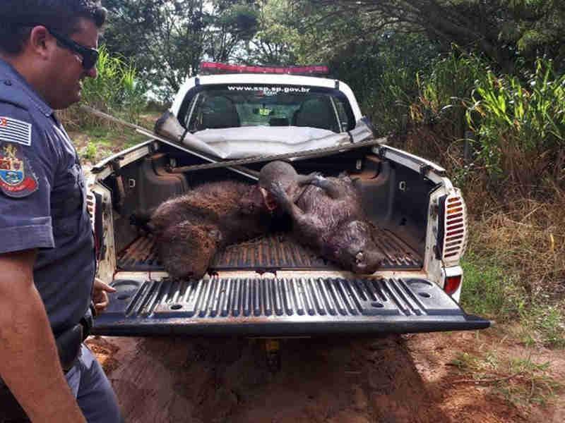 Polícia flagra quatro homens durante caça em Itajobi, SP