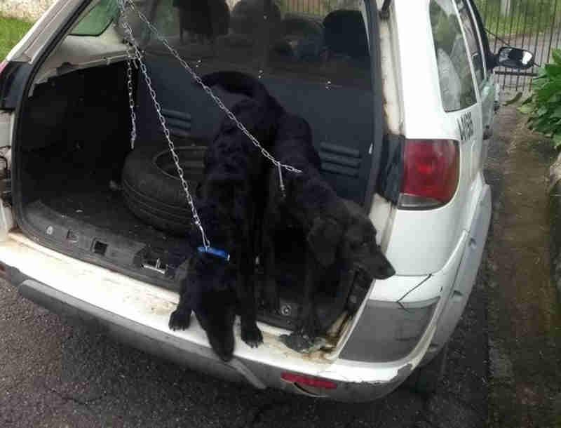 Polícia Ambiental autua homem que viajou no Carnaval e deixou cães sem água e comida