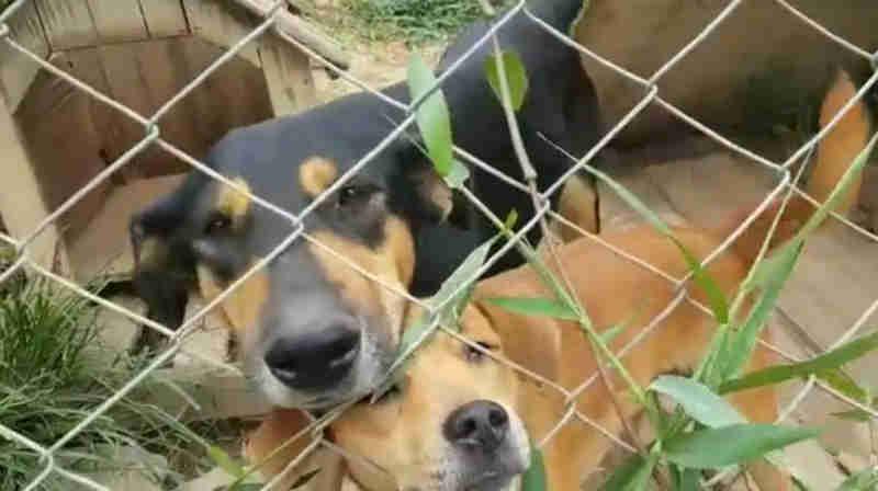 ONG resgata últimos 37 cães de abrigo na Grande SP