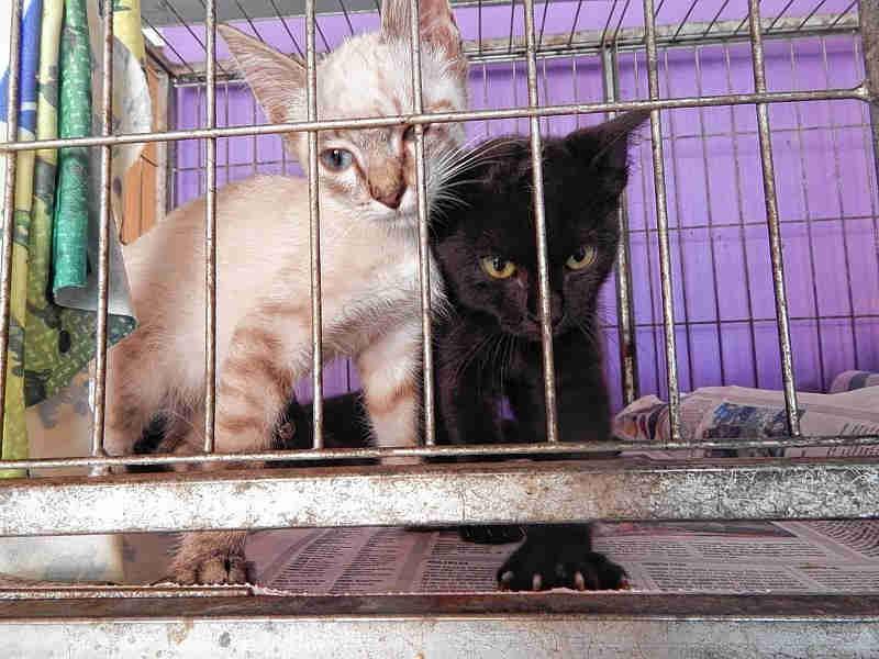 Canil de Jaú (SP) está proibido de recolher cães e gatos sadios da rua