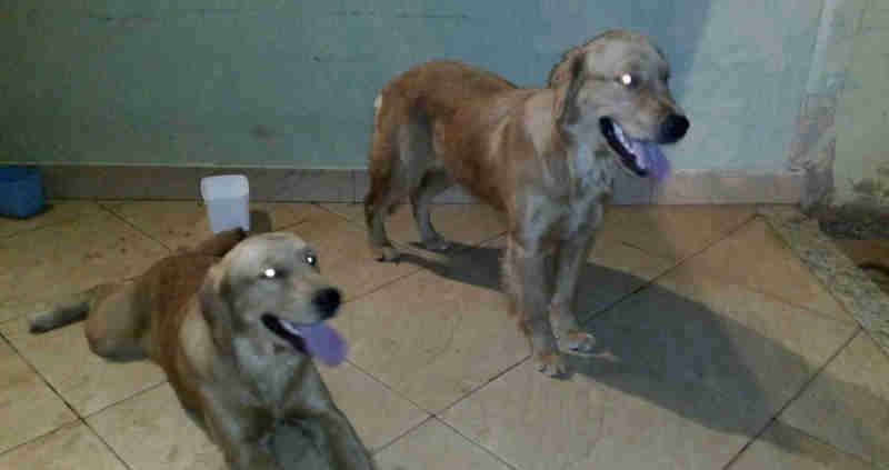 Estudante da Unicamp encontra e salva cães que estavam perdidos próximo ao centro de Limeira, SP