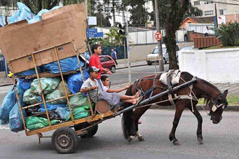 Veículos puxados por animais devem ser proibidos por lei em Osasco, SP