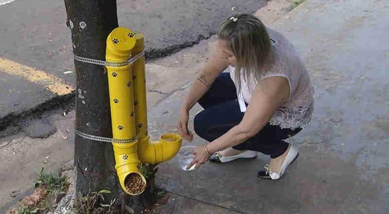 Comerciante instala dispositivo com comida e água de graça para animais de rua, e ação viraliza