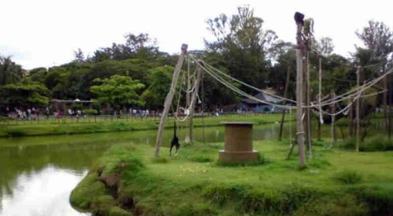 Ambientalista denuncia que macacos do zoológico municipal de Sorocaba (SP) levam 'caldo' de funcionários