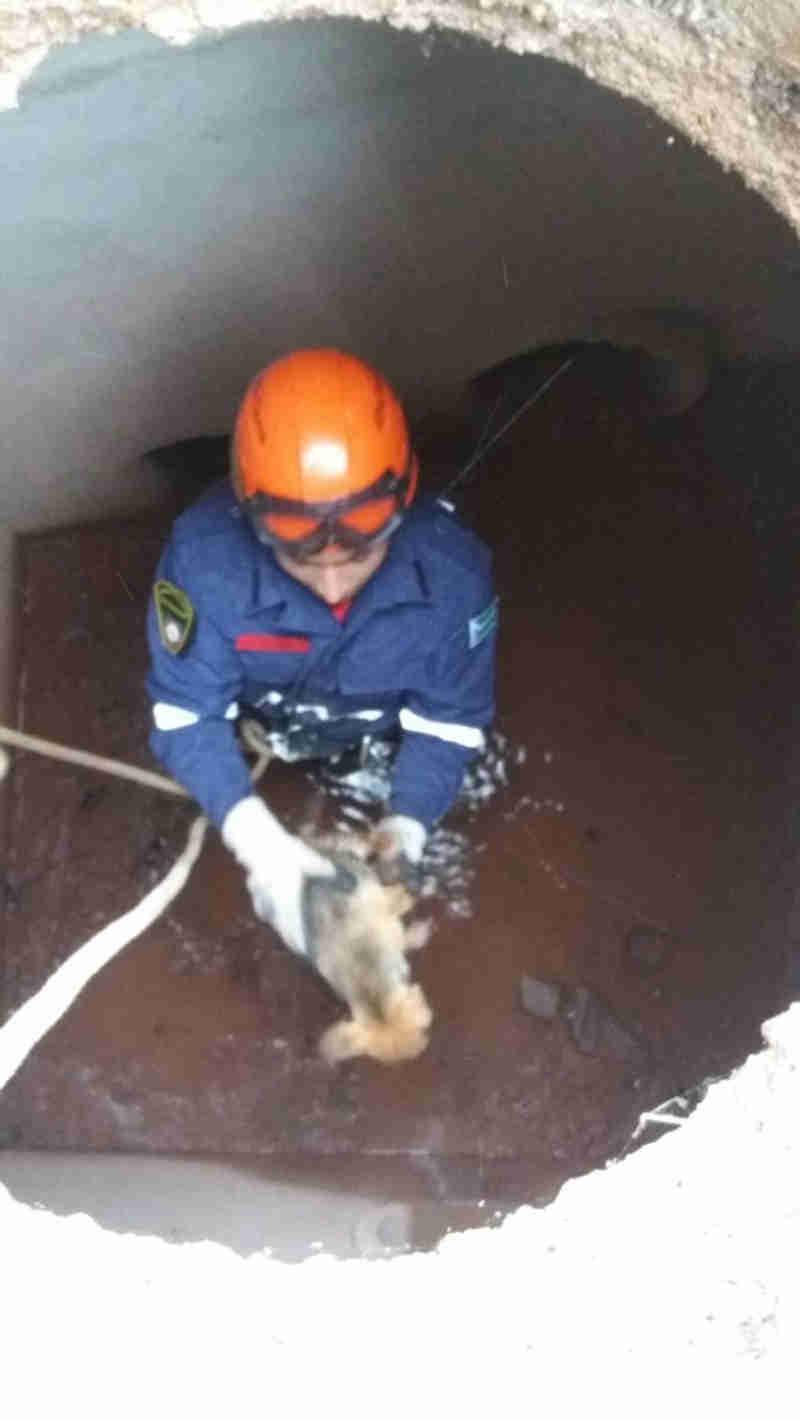 Bombeiros resgatam filhotes de cachorro dentro de tubulação em bueiro em Várzea Paulista, SP