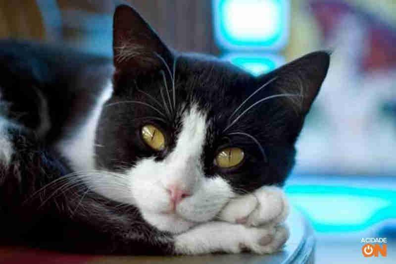 Gatos são envenenados no Jardim Cambuy, em Araraquara, SP