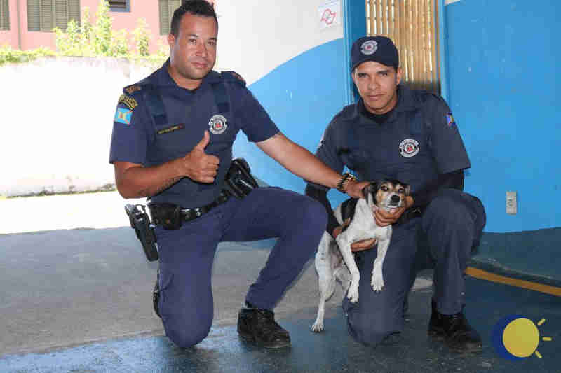 Cachorro é abandonado em telhado de igreja em Artur Nogueira, SP