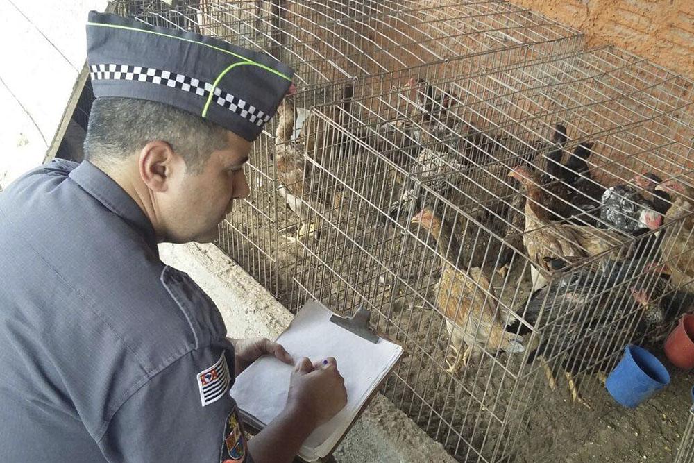 PM encontra 404 animais maltratados dentro de empresa em Bauru, SP