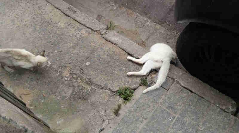 Gatos aparecem mortos com sinais de envenenamento em Cajamar, SP