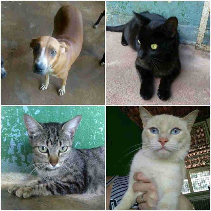 CCZ de Fernandópolis (SP) tem cerca de 90 animais disponíveis para adoção