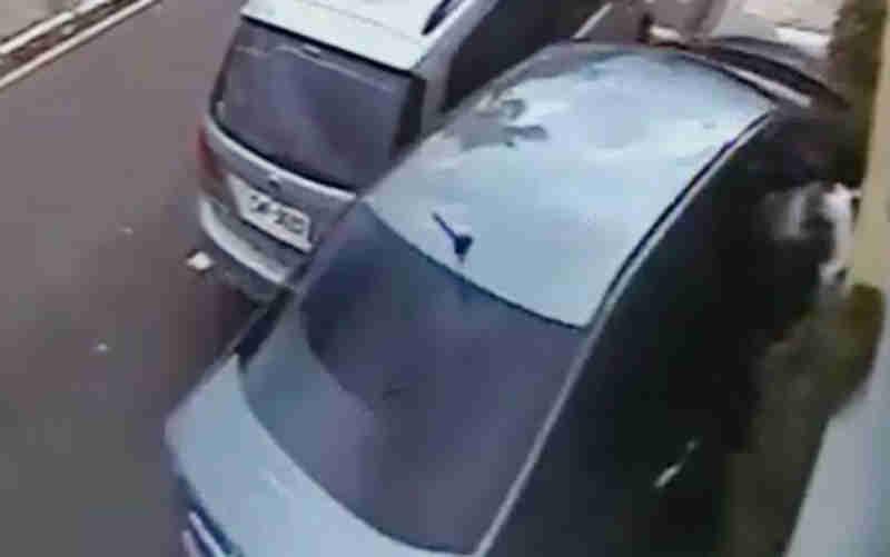 Cachorro 'voa' pela janela de carro e sobrevive a acidente em Franca, SP; veja vídeo
